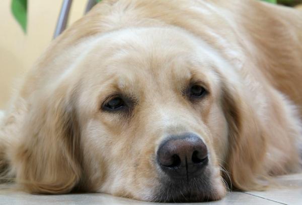 狗狗鼻子老是往外喷气